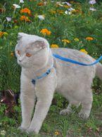 Вязка !!! Котик ищет кошечку !!! фото